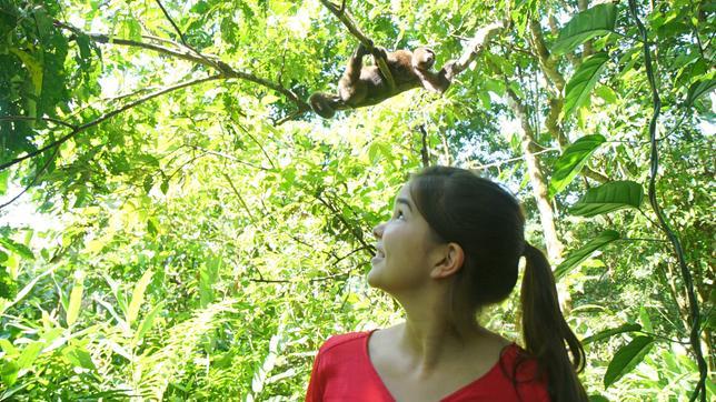 Anna und die wilden Tiere Die Affen mit den breiten Nasen: Wollaffe
