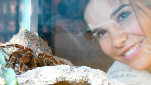 Wie gut, dass diese Vogelspinne im Terrarium sitzt. Sonst würde sich Anna nicht so nah an das Tier heranwagen.