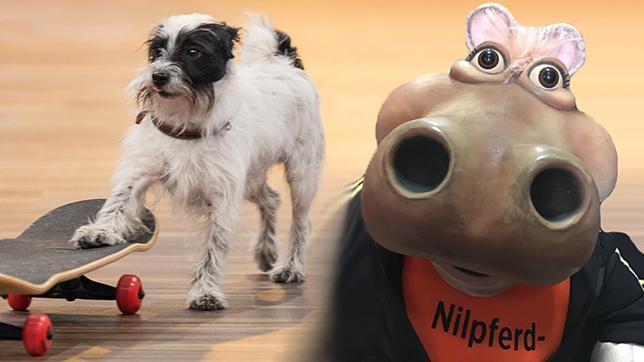 Hund und Nilpferdpuppe