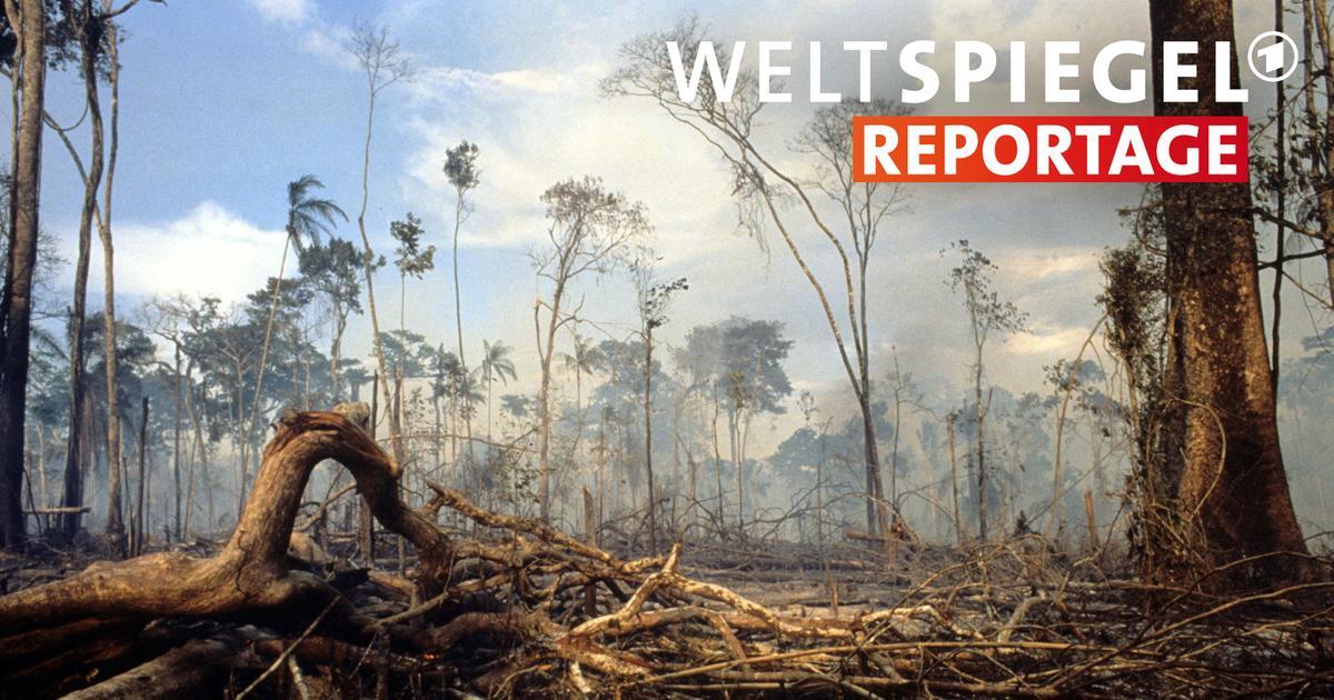 Umweltschutz in brasilien weltspiegel ard das erste for Spiegel tv reportage mediathek