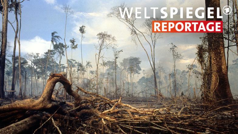 Video umweltschutz in brasilien weltspiegel ard das for Spiegel tv reportage mediathek