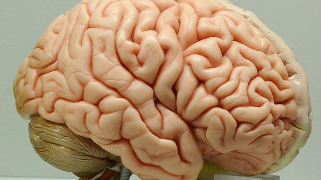Wie altert unser Gehirn? - Hirschhausens Check-up - ARD   Das Erste