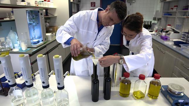 Herstellung eines eigenen Olivenöls
