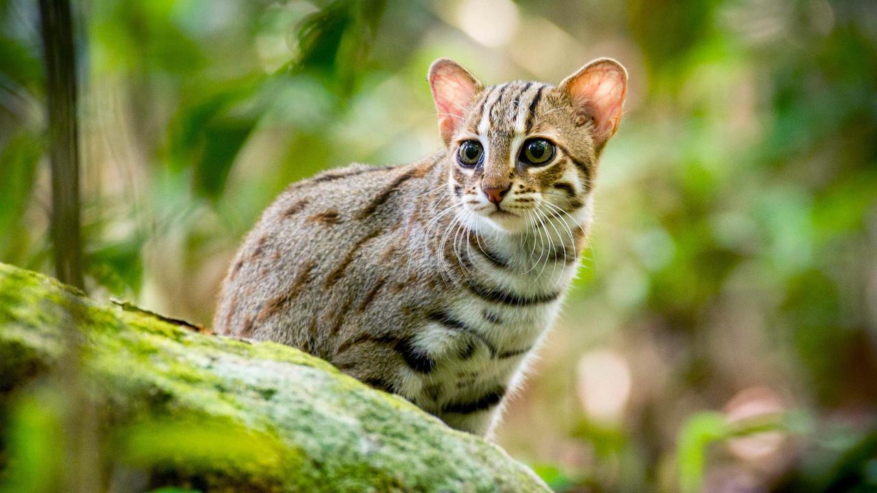 The Smallest Cat In The World Video