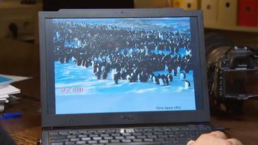 pinguin strategie