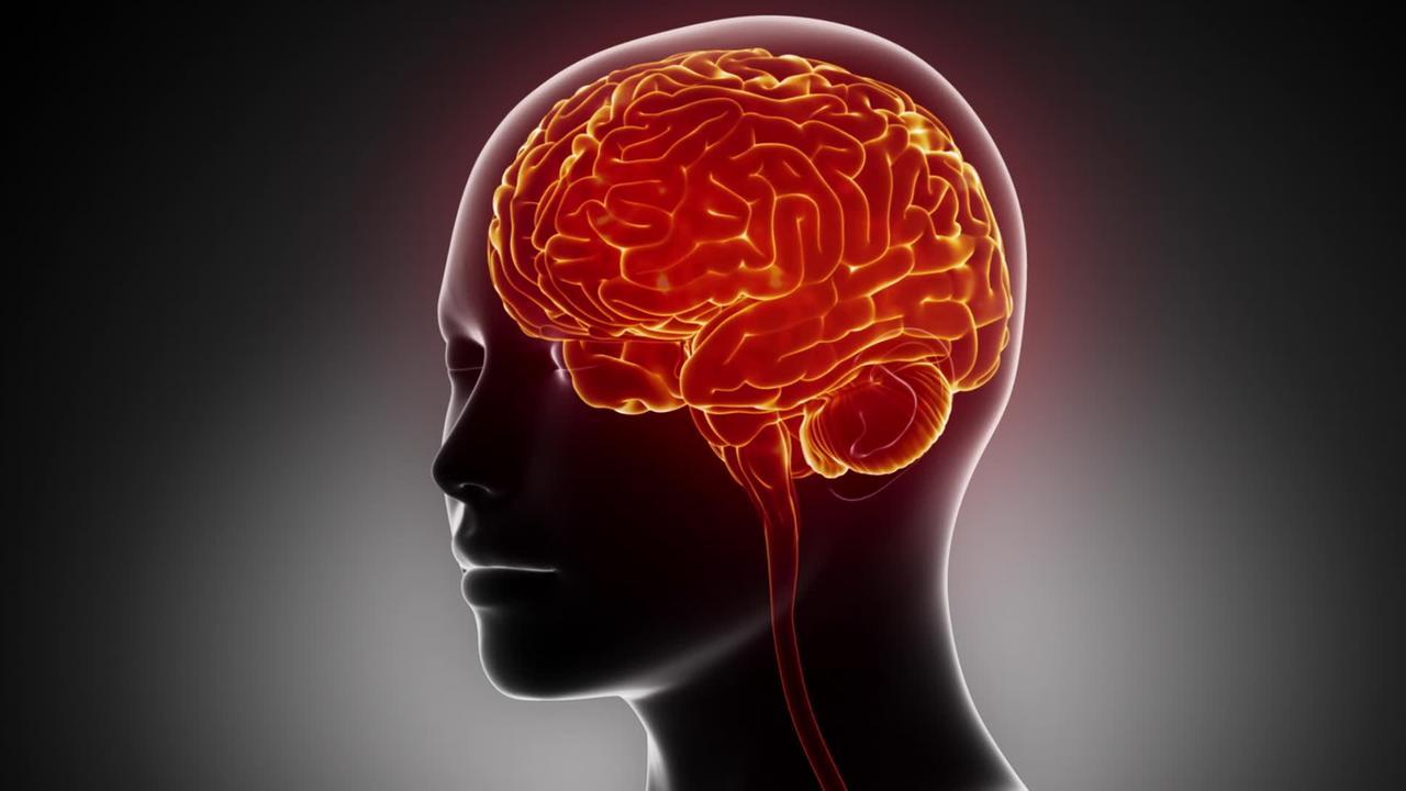 Video: Das menschliche Gehirn ...? - Wer weiß denn sowas? - ARD ...