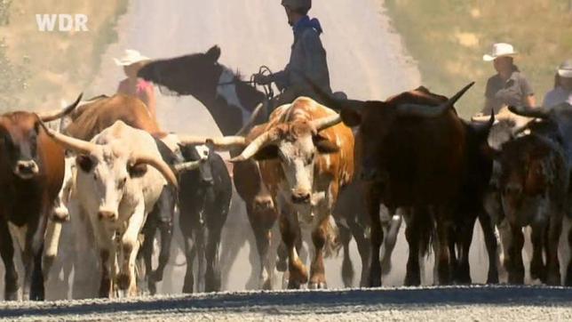 Abenteuer Wilder Westen 13.09.2015 Endlich – Der Cattle Drive! (2)