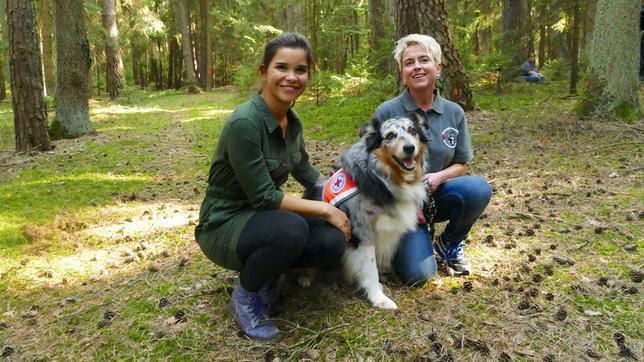 Australian Shepherd Fynn ist Rettungshund und kann versteckte Personen aufspüren.