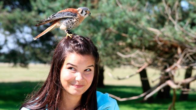 Ein Buntfalke hat es sich auf Annas Kopf gemütlich gemacht.