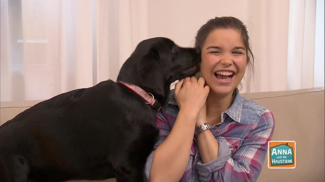 Video Labradore Anna Und Die Haustiere Ard Das Erste