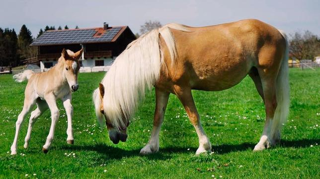 Beliebt Bevorzugt Anna und die Haustiere: Pferd - Anna und die wilden Tiere - ARD &HW_15