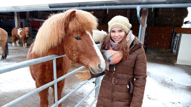 Minusgrade und Schneestürme machen Isländern dank ihres dichten Fells nichts aus.