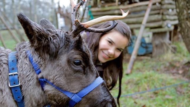 """Rentiere werden von den Ureinwohnern Schwedens, den Samen, als Haustiere gehalten. Anna hat einem Rentier ein Halfter angelegt. Sie will den """"Rentierführerschein"""" machen."""