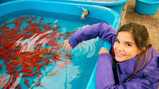 Tierreporterin Anna besucht eine professionelle Goldfischzucht.