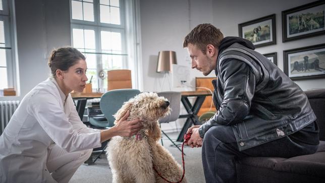 Die Tierärztin begutachtet den Hund.