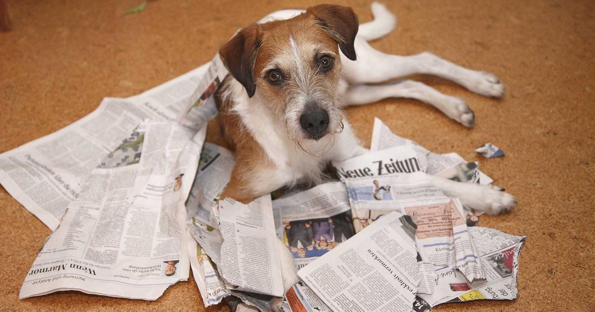 Service Haustiere Morgenmagazin Ard Das Erste