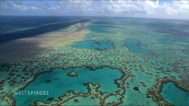 bedrohung great barrier reef