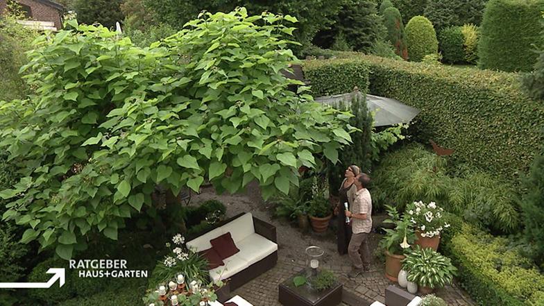 Reihenhaus mit Gartenparadies - Ratgeber: Haus + Garten ...