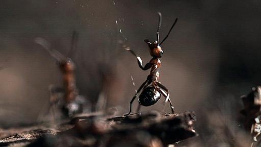 Ameisen-Teenager, die Sex haben