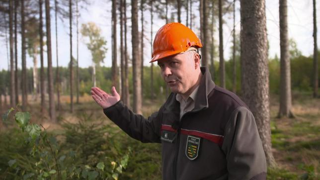 Ein Mann steht mit Helm in einem Wald.