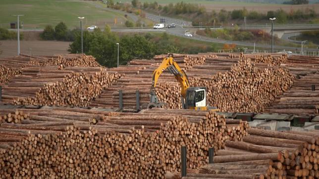 Auf einem Grundstück liegen viele gestapelte Holzstämme.