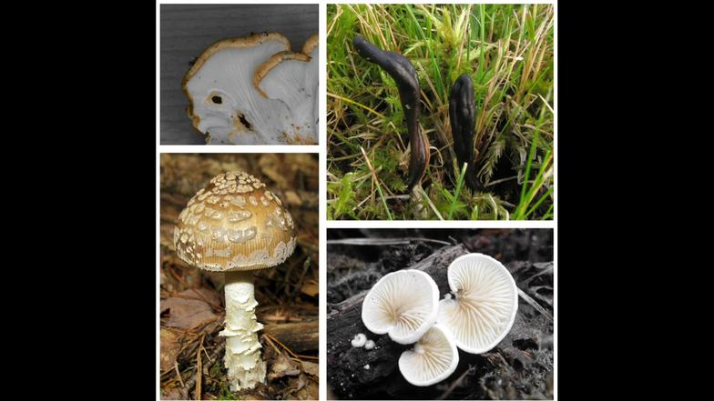 Lustige Pilznamen