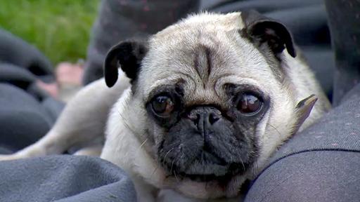 Qualzucht Bei Hunden W Wie Wissen Ard Das Erste