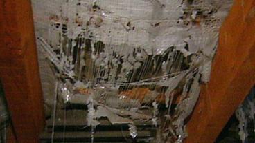 marder in der zwischendecke pflanzen f r nassen boden. Black Bedroom Furniture Sets. Home Design Ideas