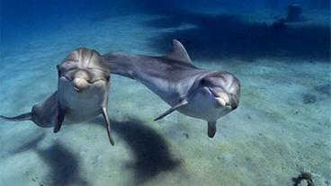 Bilder Delfine