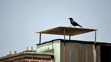 vögel kindern erklären frühling