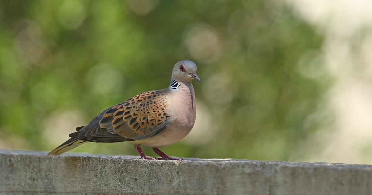 Welcher Vogel