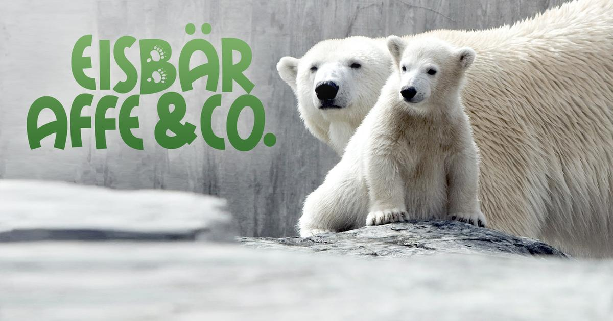 Eisbär Affe & Co