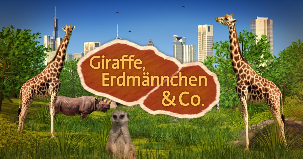 Erdmännchen Giraffe Und Co