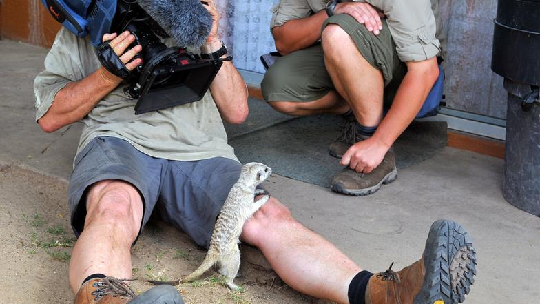 Das Filmteam (Staffel 3) - Das Waisenhaus für wilde Tiere
